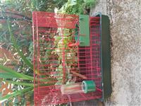 Kavezi za ptice