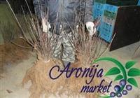 Aronija sadnice AKCIJA januar/februar