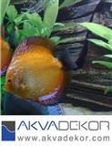 Izrada akvarijuma, akvadekor, akvaristika