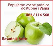 Prodaja sadnica raznoga voća i loze