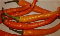 Bulgarian carot-Chili