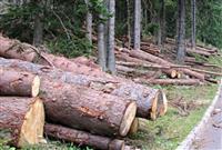 Povoljno kvalitetno drvo za ogrev i gradju