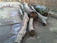 Orahovi trupci na prodaju