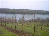 Vocnjak na Borkovackom jezeru