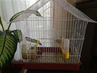 Ptice i kavez