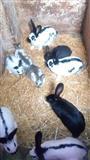 Kuniće