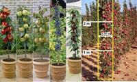 Preko 200 sorti raznih sadnica voca!