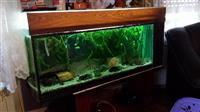 Akvarijum sa svom opremom na prodaju