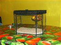 Akvarijumi povolno