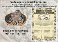 Prodaja svežih, oplođenih jaja japanskih prepelica