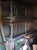 Kavez za pilice