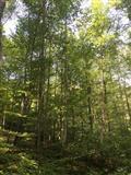 Bukova drva na panju