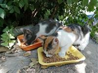 Poklanjam mace i macice