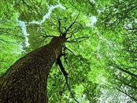 Šuma hrastova odrasla 13,5 ha