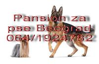 Pansion za pse (cuvanje pasa) Beograd