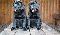 Psi svih rasa i starosti