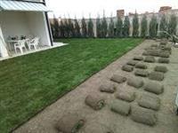 Tepih trava rolna