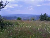Parcela na Staroj planini, 18 hektara