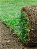 Tepih trava uredjenje dvorista