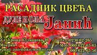 Rasadnik Janic - veliki izbor rasada cveca