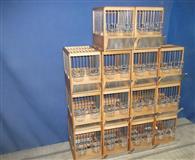 takmicarski kavezi