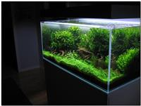 Kompletna prihrana za akvarijumske biljke