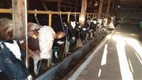 Na prodaju farma muznih krava