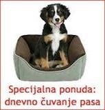 Cuvanje pasa
