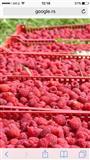 Poljoprivredna proizvodnja Malina
