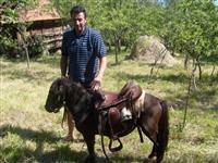 Konj ponija
