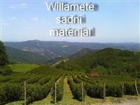 SADNICE MALINE SORTE WILAMET