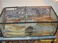 Akvarijum sa kornjacom