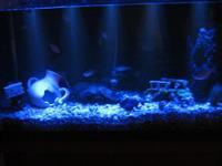 Mesecina za akvarijum 50 cm