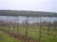 Zasad jabuke na Borkovackom jezeru