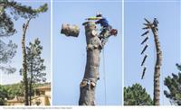 Secenje stabala-CELA SRBIJA-