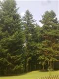 secenje drveta