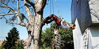 Profesionalno secenje stabala-CELA SRBIJA-