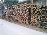 Bagremova drva