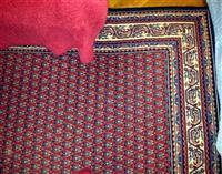 Tepih vuna snizenje