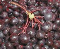 ARONIJA NERO - sadnice, plod i proizvodi od aronij