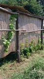 Vocnjak u selu Beljin