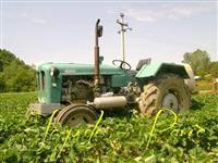 Plantaza jagode sadnice