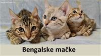 bengalska macka