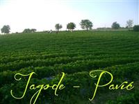 Plantaza Jagoda Pavic