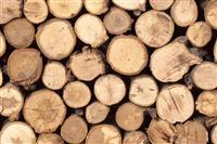 Bagrem, drva u okolini Nisa