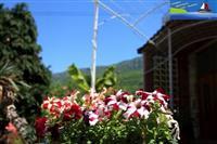 Kompleks Apartmani Lile Pestani-Ohrid