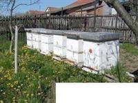 Rojevi i kompletna pčelinja društva