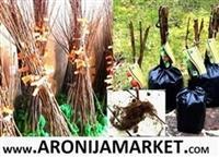 Sadnice borovnice, aronije, lesnika, oraha