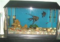 Akvarijum od 100l