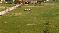 Plac 6,25 ari Zlatibor-Tornik